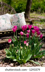 Tulips in front of Bench