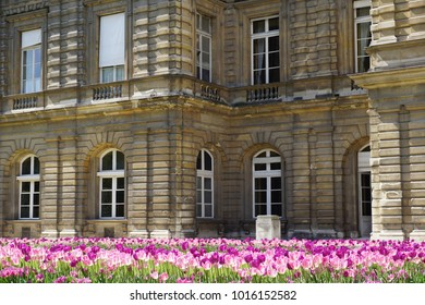 Tulips in front of a brick building in Paris