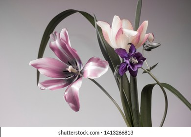 tulips and garden herbs, botanical composition, gray background. studio shoot.
