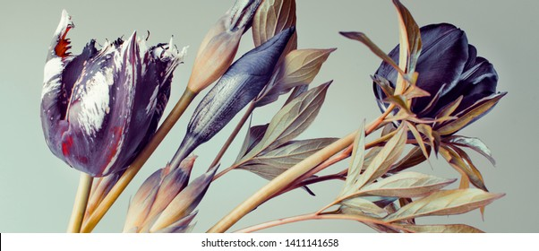 tulips and irises. abstract composition and colors. dark buds.