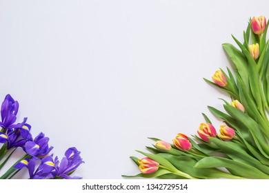 Tulips and irises on a white background, background, blank