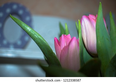tulips isolated with background / close up