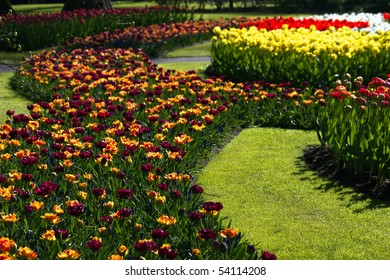 Tulips in many beautiful colors in spring in park