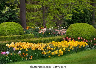 Tulips and narcissus in the park. Spring landscape.
