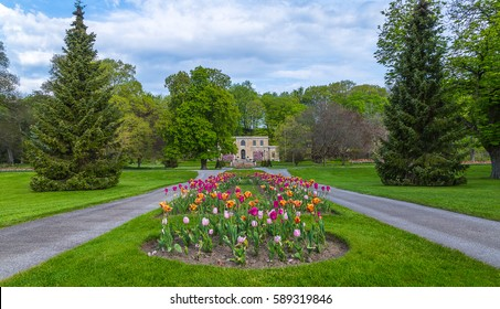 Tulips Niagara
