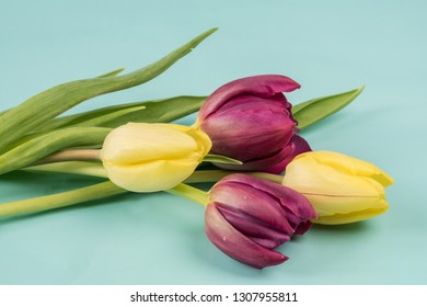 Tulips on blue background