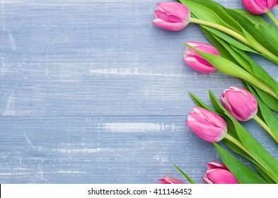Tulips on a blue background with copyspace