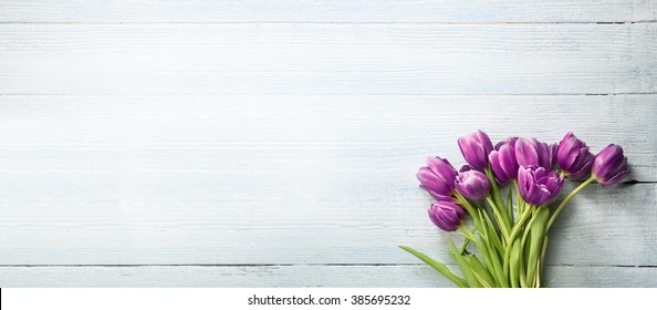 tulips on the bright background