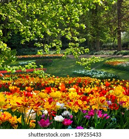 Tulips on the forest background. Spring landscape.