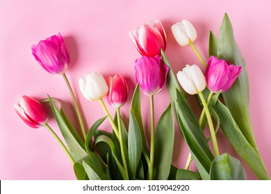 Tulips on a pink background.