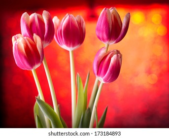 Tulips on red bokeh background