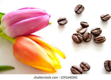 Tulips on white background. Spring flowers and coffee beans.