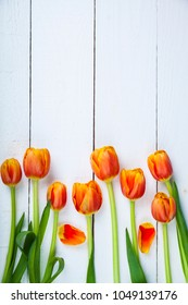 Tulips on a white wooden background with space for text. Beautiful spring flowers.