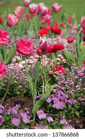 tulips and other
