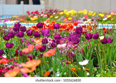 Tulips and other colorful flowers blooming in the Indian Char Bagh Garden in Hamilton Gardens, New Zealand