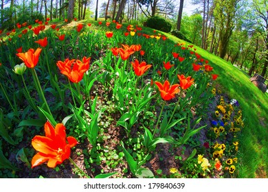 tulips in a park in the spa, fish eye lens