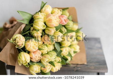 Tulips of pastel yellow color. Big buds. Floral natural backdrop. Unusual flowers, unlike the others. Shallow focus. Wallpaper, Horizontal photo
