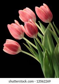 tulips pink flower black green bouquet color