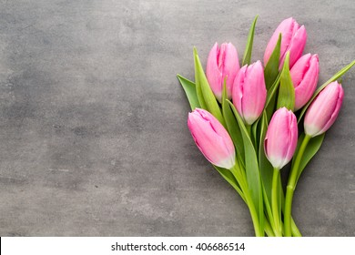 Tulips pink, on the gray background.