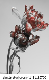 tulips with red buds on a gray background. two flowers.
