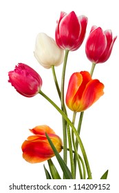 Tulips. Six flowers isolated on white