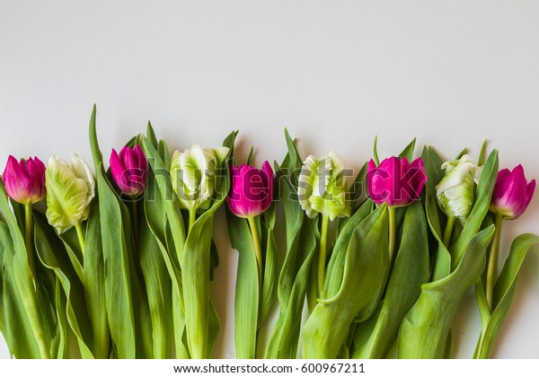 Tulips  spring flowers that warm our soul and delight the heart. A bouquet of tulips in the spring tells us about the upgrade process and helps to feel the subtle luck.