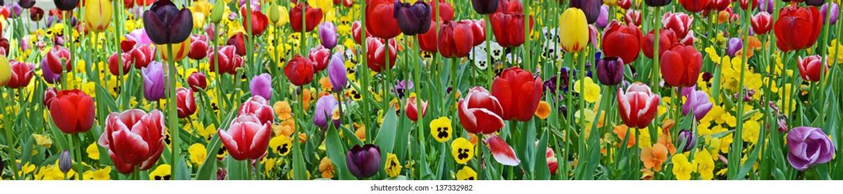 Tulips & violets