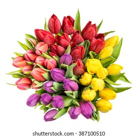 Tulips with water drops. Spring flowers red, pink, yellow, purple
