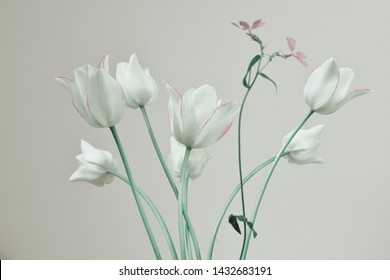 tulips with white buds on a gray background, spring bouquet, green stems.