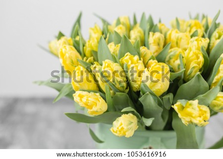 Tulips of yellow color in green vase. Big buds of multicoloured tulips. Floral natural backdrop. Bicolour tulips filled picture. Unusual flowers, unlike the others. type of flower parrot