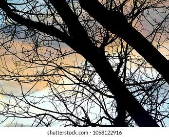Tulsa, Oklahoma/ USA - March 29, 2018:  Winter tree at Sunset