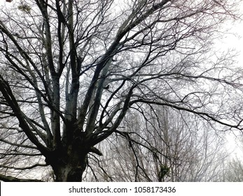 Tulsa, Oklahoma/USA, March 29, 2018:  Tree branches before leaves emerge in the Spring