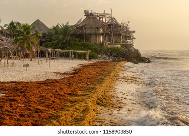 Tulum, Mexico - 11 August 2018: A man is cleaning Sargassum seaweed from the beach.