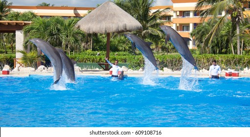 TULUM, MEXICO: DECEMBER 2, 2016: Dolphins performing during a dolphin show with their trainers at Dolphinaris Tulum at Bahia Principe Hotel in Tulum Mexico.