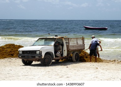 Tulum, Yucatán / Mexico - June 25th 2018: Workers cleaning the beach of Tulum and loading Sargassum seaweed on a truck. Climate change is making seaweed more  and more common in the Caribbean.