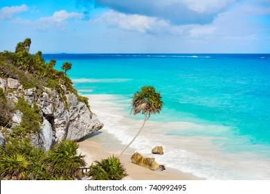 Tulum turquoise beach  palm tree in Riviera Maya at Mayan Mexico