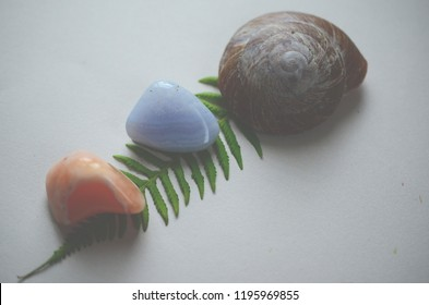 Tumbled Carnelian, Blue Lace Agate, & naturally foraged snail shell. Adorable natural curiosity set. Foraged shell, healing crystal bundle. Orange and blue crystals, cute green fern; Crystal Mockup.