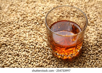 Tumbler glass with whiskey standing on barley malt grains