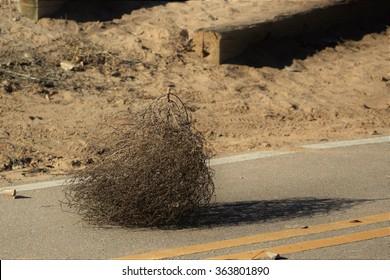 Tumbleweed Along a Pedestrian Trail
