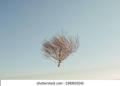 Tumbleweed  in the blue sky