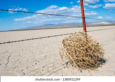 Tumbleweed in Desert on Cracked Earth