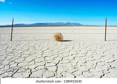 Tumbleweed in desert on dry earth