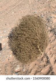 Tumbleweed desert sand sunny dry arid