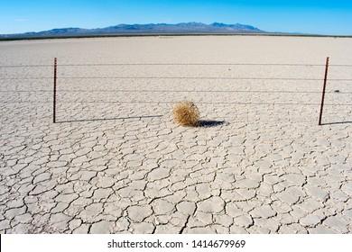Tumbleweed on dry cracked desert earth with blue sky. American western desert landscape.