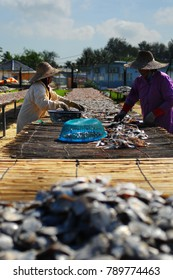Tumpat, Malaysia - January 07, 2018 : Female worker prepare a dry salted fish under the sunny day at factory in Kelantan.