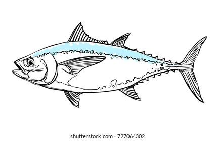 tuna blue hand drawn on white