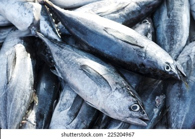 Tuna, Eastern little tuna, Thunnini, Longtail tuna, Northern bluefin tuna