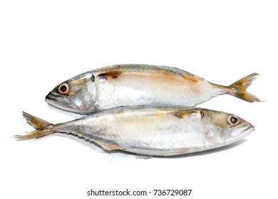 tuna fish on white background