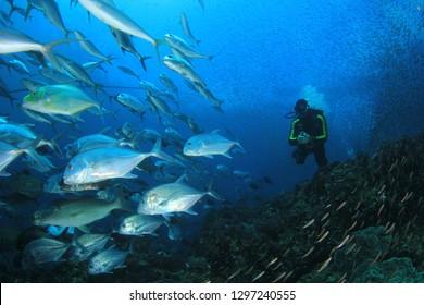 Tuna fish and scuba divers