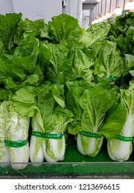 Tunas Manja Supermarket, Malaysia - October, 2018: Chinese cabbages sold at the supermarket.